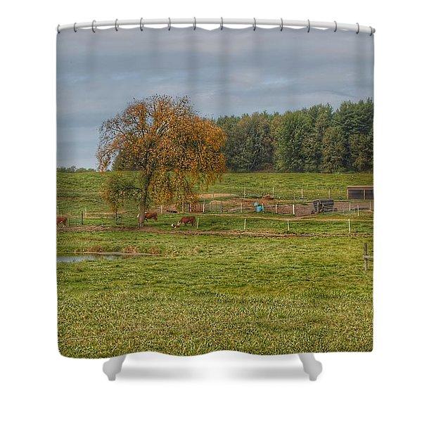 1002 - Kingston Road Cows Shower Curtain