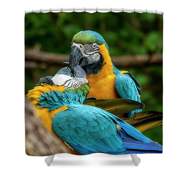 Kissing Parots Shower Curtain