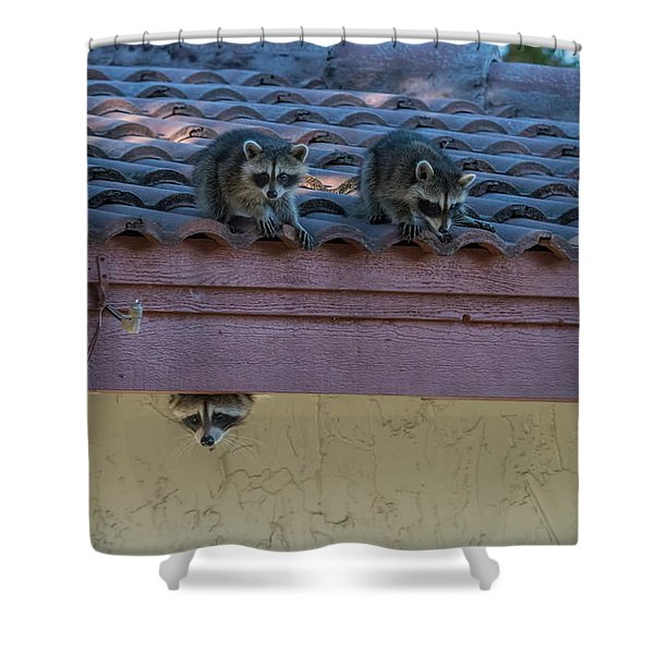 Kits On The Roof Shower Curtain