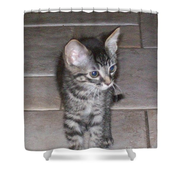 Martius Kitten Shower Curtain