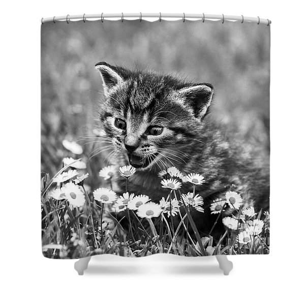 Kitten With Daisy's Shower Curtain