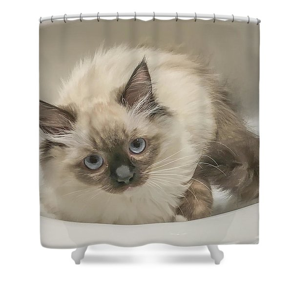 Kitty Blue Eyes Shower Curtain