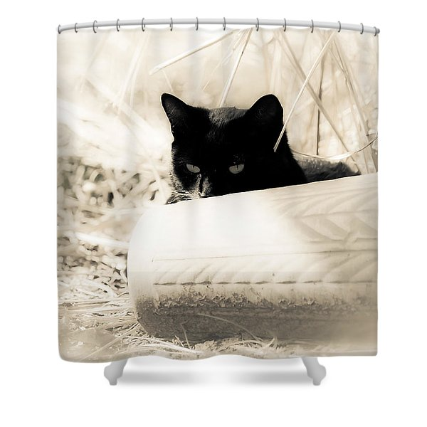 Kitty Stalks In Sepia Shower Curtain