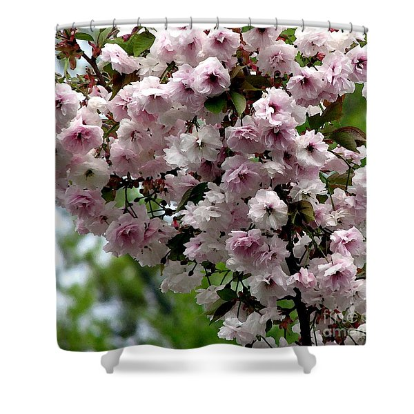 Japanese Cherry Tree Blossoms Highland Park Rochester Ny Watercolor Effect Shower Curtain