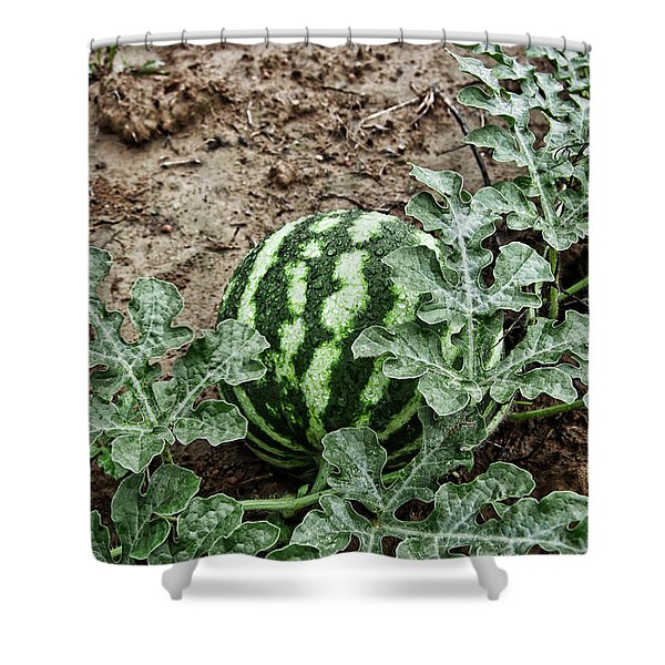 Ky Watermelon Shower Curtain