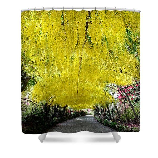 Laburnum Arch, Bodnant Garden Shower Curtain