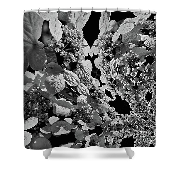 Lace Cap Hydrangea Flower Abstract Shower Curtain
