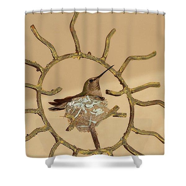 Lady Hummingbird On Her Nest Shower Curtain