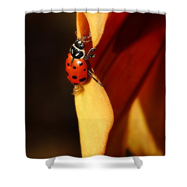 Ladybug On Orange Yellow Dahlia . 7d14679 Shower Curtain