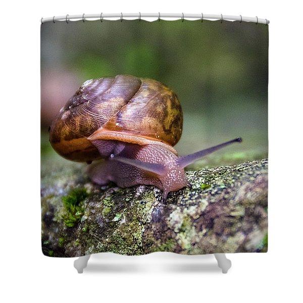 Land Snail II Shower Curtain