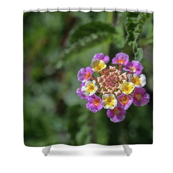 Lantana In Bloom Shower Curtain