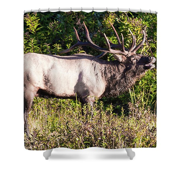 Large Bull Elk Bugling Shower Curtain