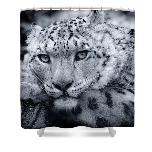Large Snow Leopard Portrait Shower Curtain