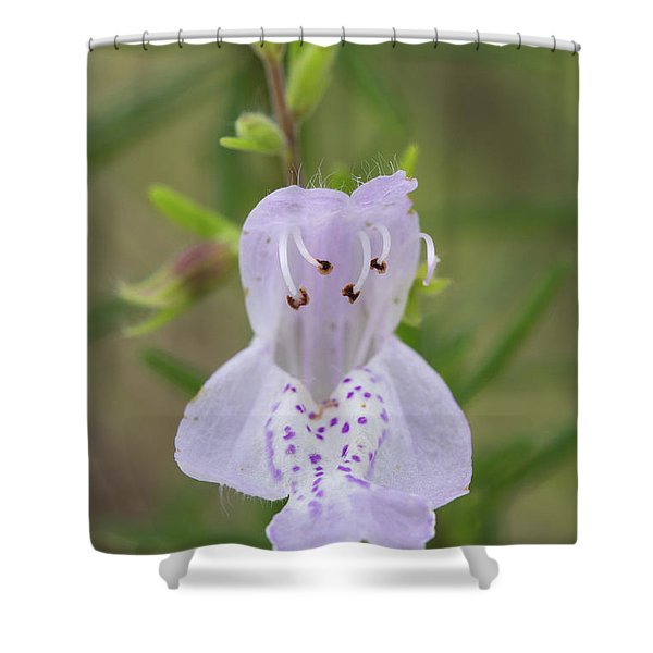 Largeflower False Rosemary #1 Shower Curtain
