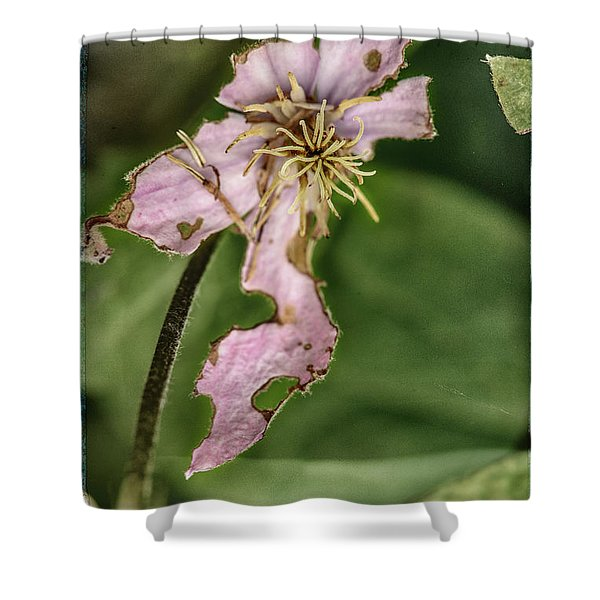 Later That Same Day Shower Curtain
