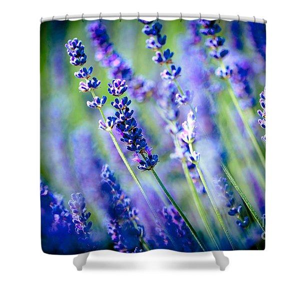 Shower Curtain featuring the photograph Lavander Flowers In Lavender Field Artmif by Raimond Klavins