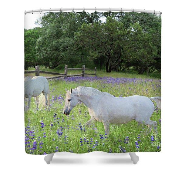 Lavender Pastures Shower Curtain
