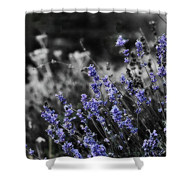 Lavender B And W Shower Curtain