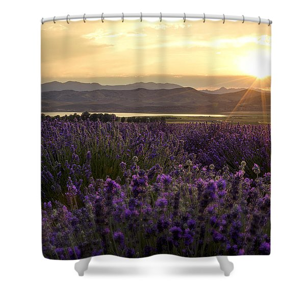 Lavender Glow Shower Curtain
