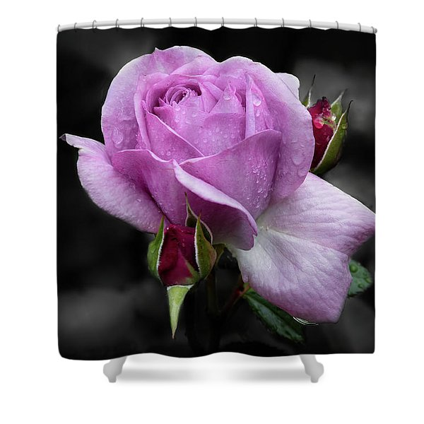 Lavender Rose Shower Curtain