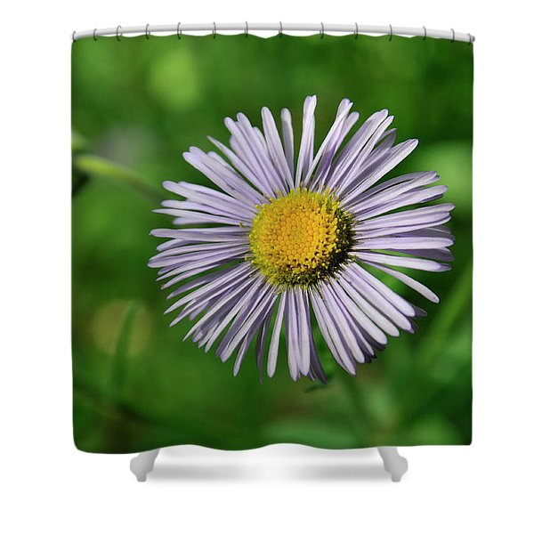 Lavender Serenity Shower Curtain