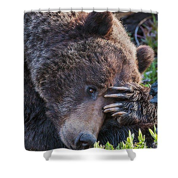 Lazy Bear Shower Curtain