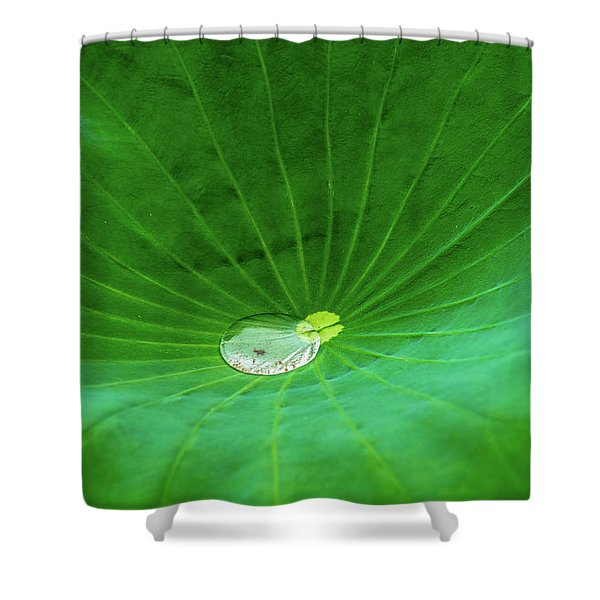 Leaf Cupping A Giant Water Drop Shower Curtain