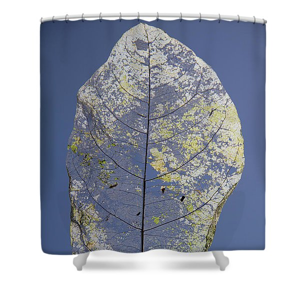 Shower Curtain featuring the photograph Leaf by Debbie Cundy