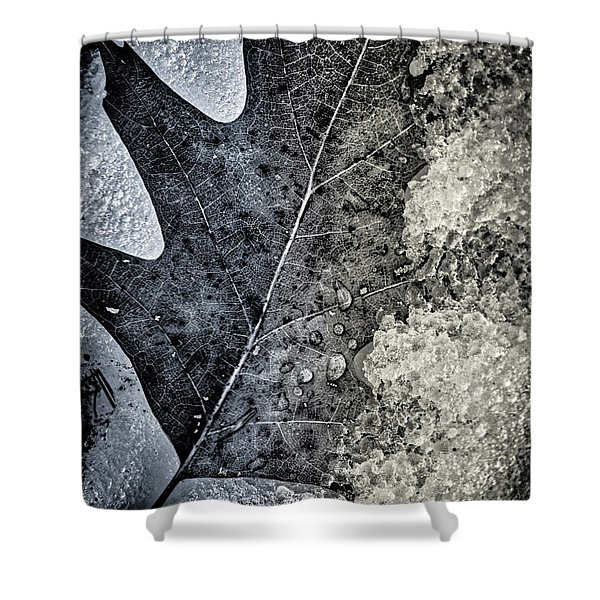 Leaf On Ice Shower Curtain