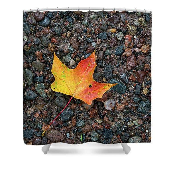 Leaf On Wet Gravel Shower Curtain