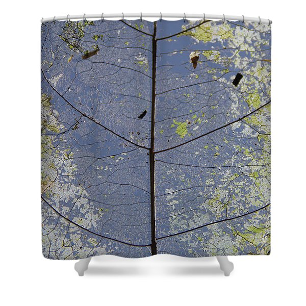 Shower Curtain featuring the photograph Leaf Structure by Debbie Cundy