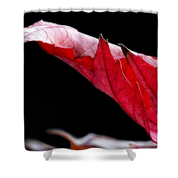 Leaf Study IIi Shower Curtain