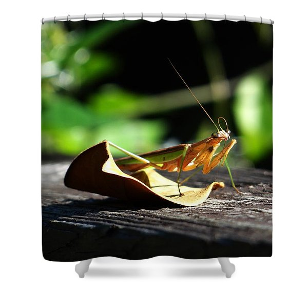Leafy Praying Mantis Shower Curtain