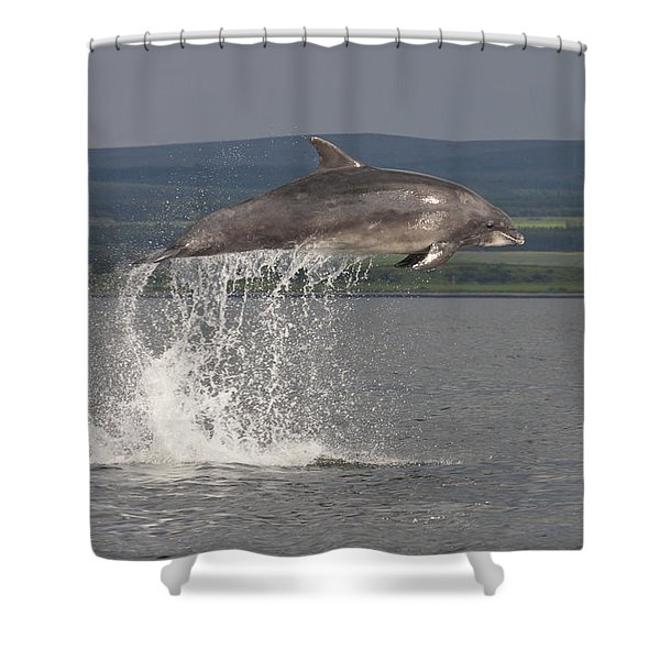 Leaping Bottlenose Dolphin  - Scotland #39 Shower Curtain