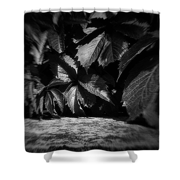 Leaves #9671 Shower Curtain