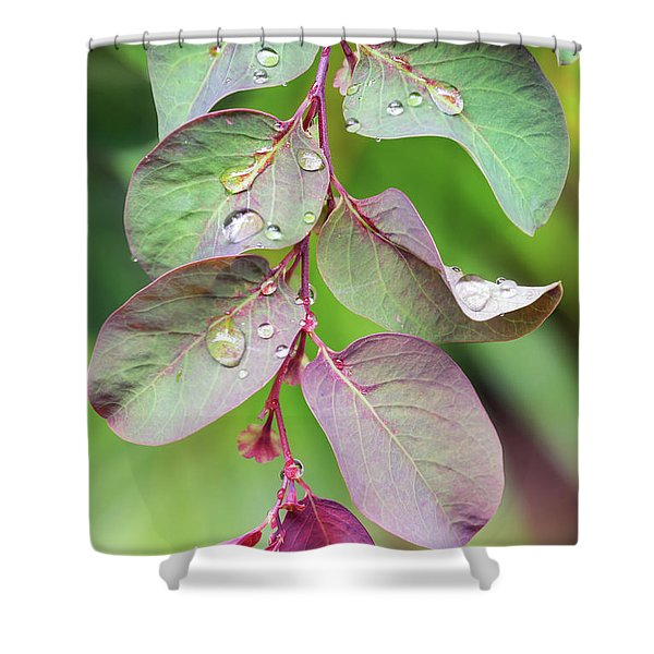 Leaves And Raindrops Shower Curtain