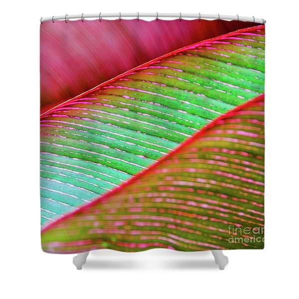 Leaves In Color  Shower Curtain
