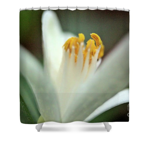 Lemon Flower 2018 Shower Curtain