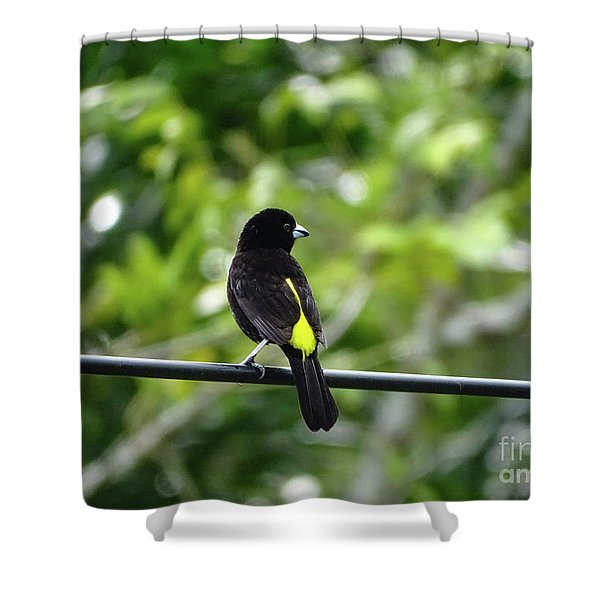 Lemon-rumped Tanager Shower Curtain