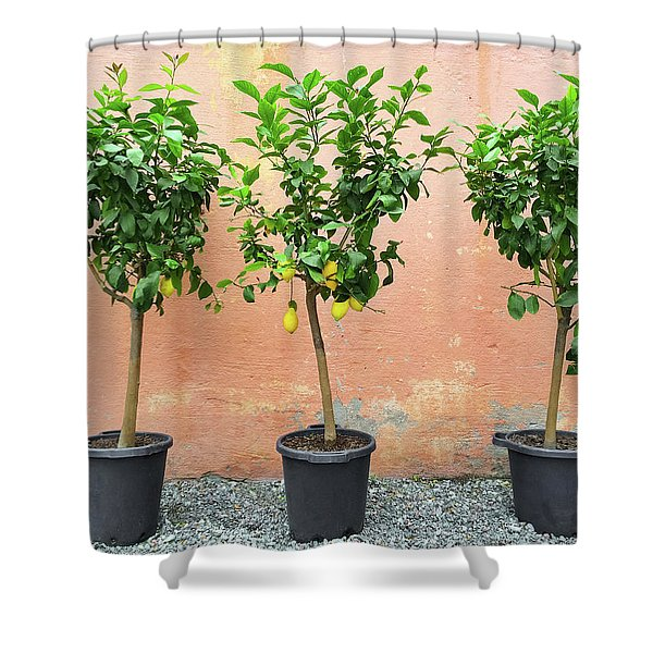 Lemon Trees With Ripe Fruits Shower Curtain