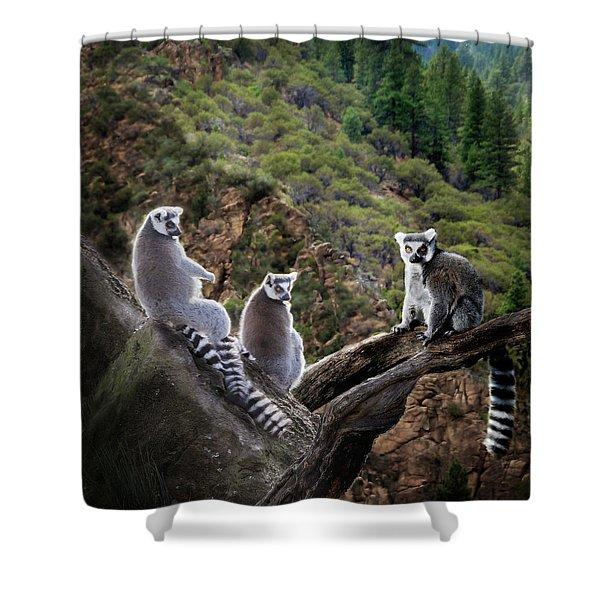 Lemur Family Shower Curtain