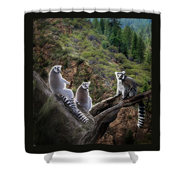 Shower Curtain featuring the photograph Lemur Family by Melinda Hughes-Berland