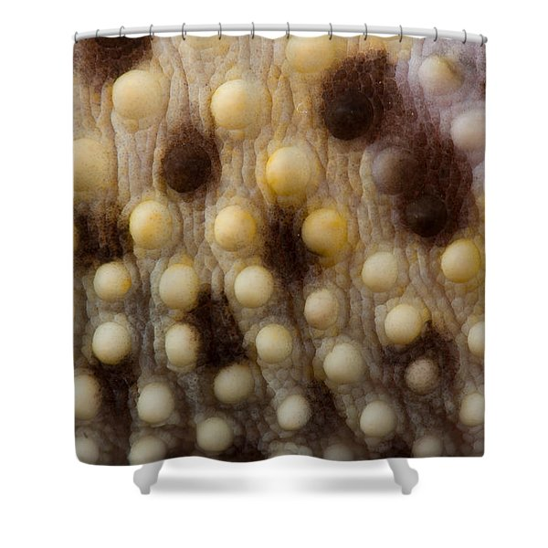 Leopard Gecko Eublpharis Macularis Shower Curtain