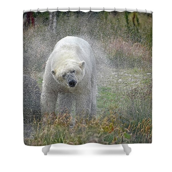 Lets Twist Again Shower Curtain