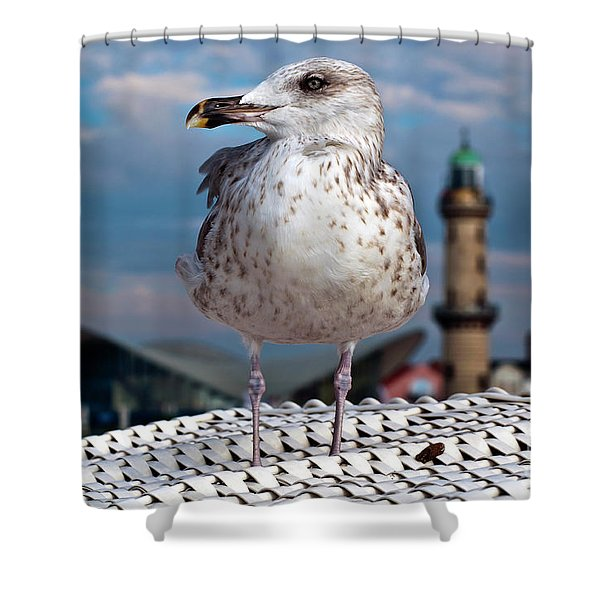 Shower Curtain featuring the photograph Liberty Of An Pacific Gull by Silva Wischeropp
