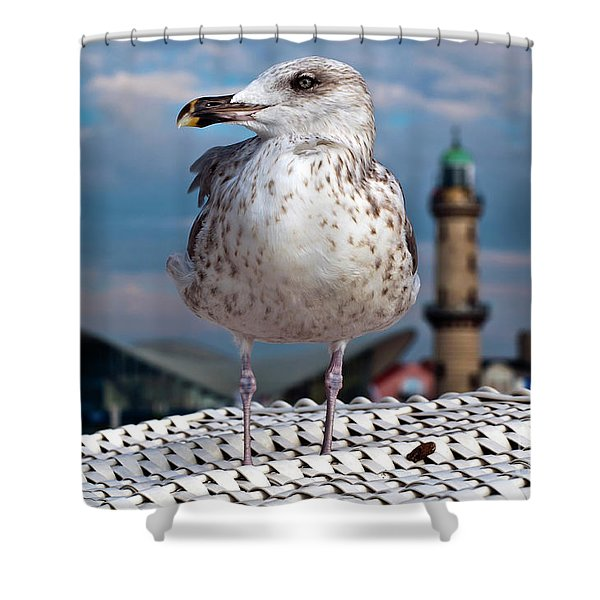 Liberty Of An Pacific Gull Shower Curtain