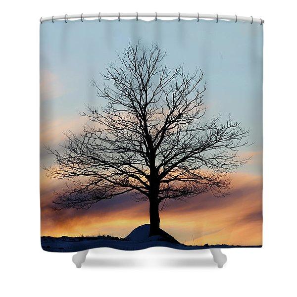 Liberty Tree Sunset Shower Curtain