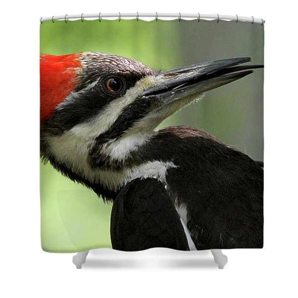 Lick It Up - Pileated Woodpecker Shower Curtain