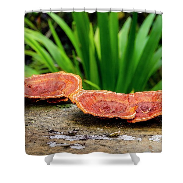 Life On A Log Shower Curtain