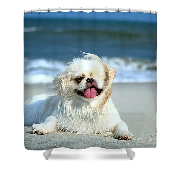 Lifes A Beach Shower Curtain